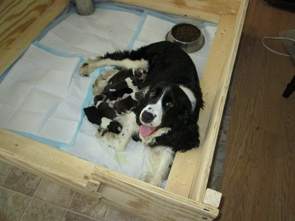 Gracie and Puppies 4-27-14